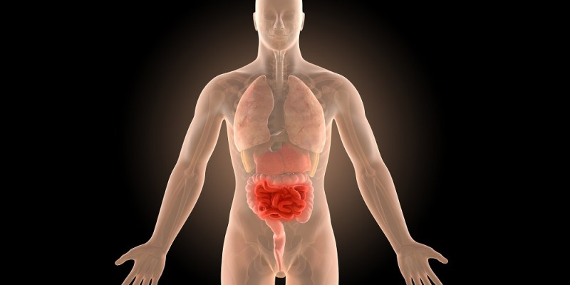 gut bacteria fuel autoimmune disease