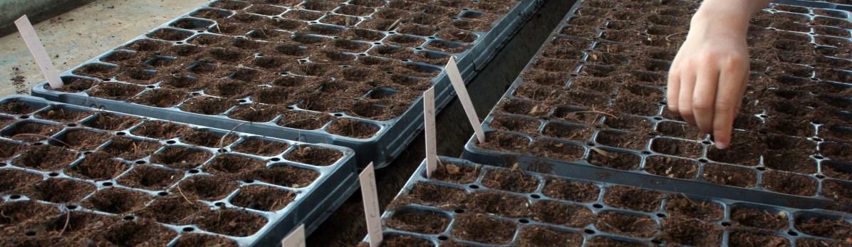 AF-seeding