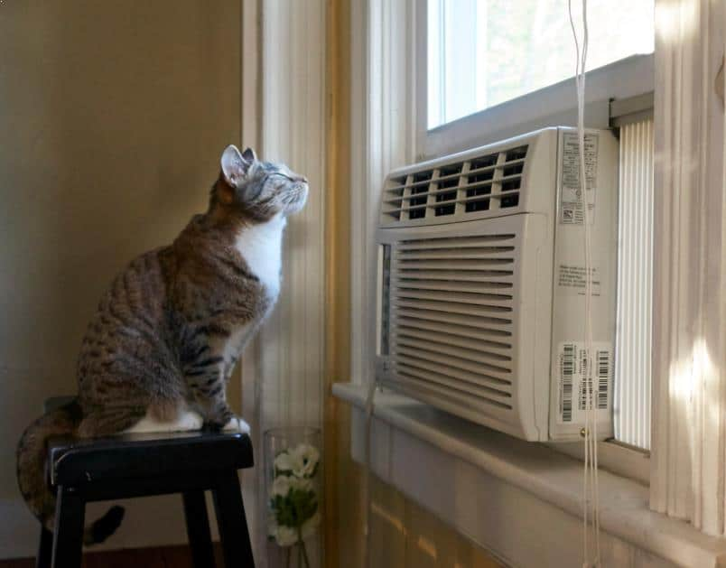 kucing AC (Air Conditioner)