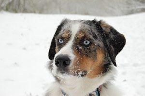 My first SNOW DOG DAYZ with daddyz!