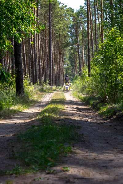 Gear Review: Burley Tail Wagon   Long Haul Trekkers