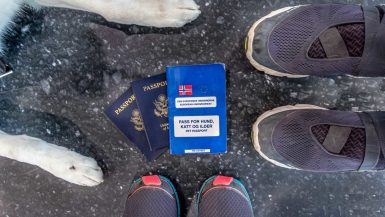 International air travel with a dog sometimes requires a pet passport.