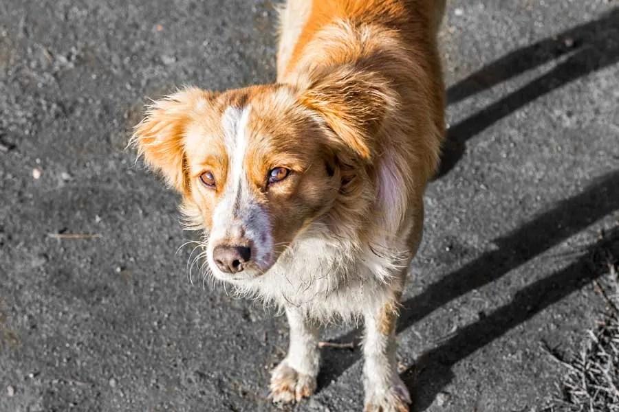 Peanut the Street Dog we Had to Leave Behind