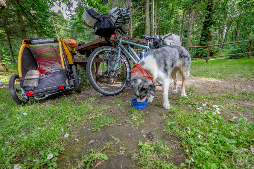 Storing food when to bike with a dog requires collapsible bowls and protection from hungry pups!