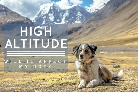 High Altitude: Will It Affect My Dog?   Long Haul Trekkers