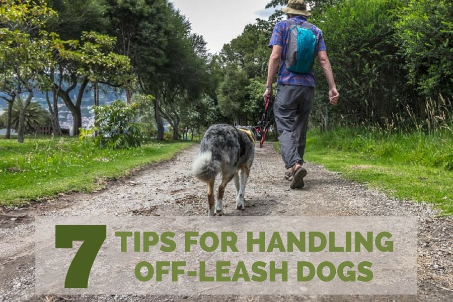 7 Tips for Handling Off-Leash Dogs | Long Haul Trekkers
