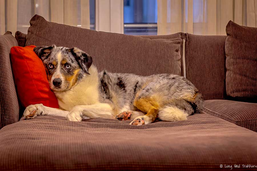 How to Find Hotels that Allow Pets