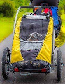 Burley Tail Wagon - Long Haul Trekkers Shop