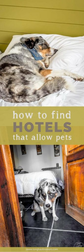 How to Find Hotels that Allow Pets While Traveling | Long Haul Trekkers