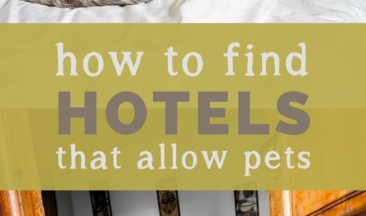 How To Find Hotels That Allow Pets While Traveling Long Haul Trekkers