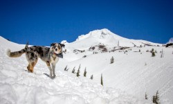 Sora standing tall at Timberline Lodge at Mount Hood