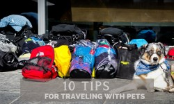 10 Tips for Traveling with a Pet - Pinterest