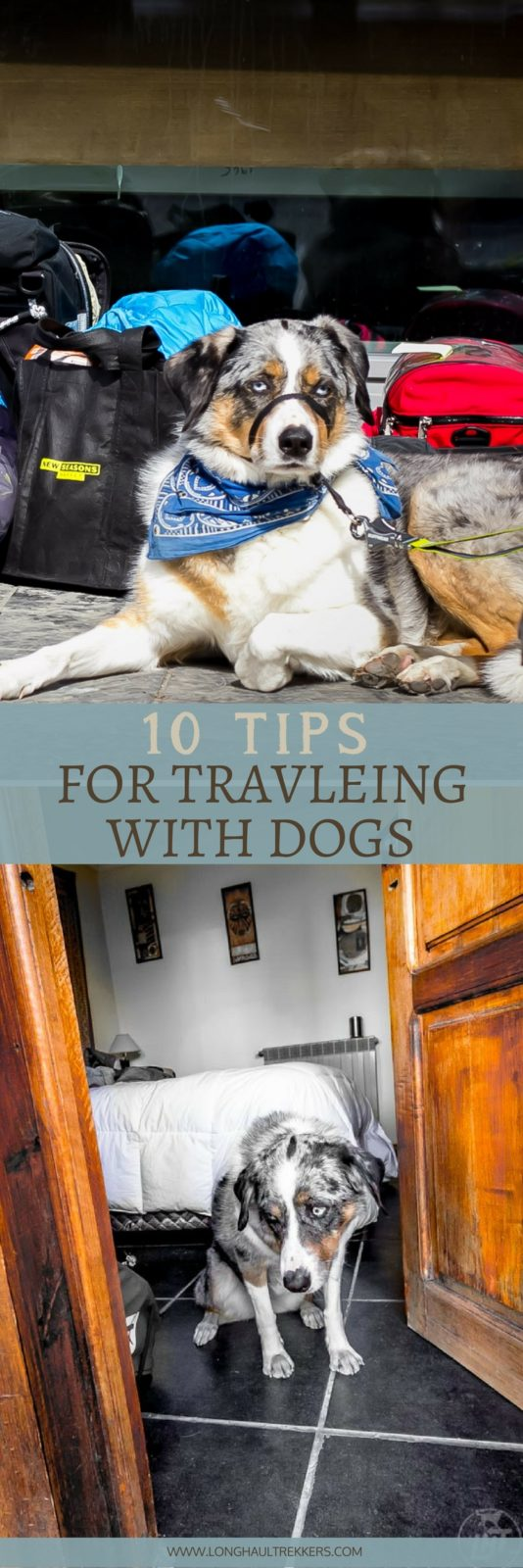 10 Tips for Traveling with a Pet - Pinterest Banner.