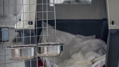 Ensure that your dog's kennel meets the airlines guidelines, otherwise they may not let you fly with your dog.