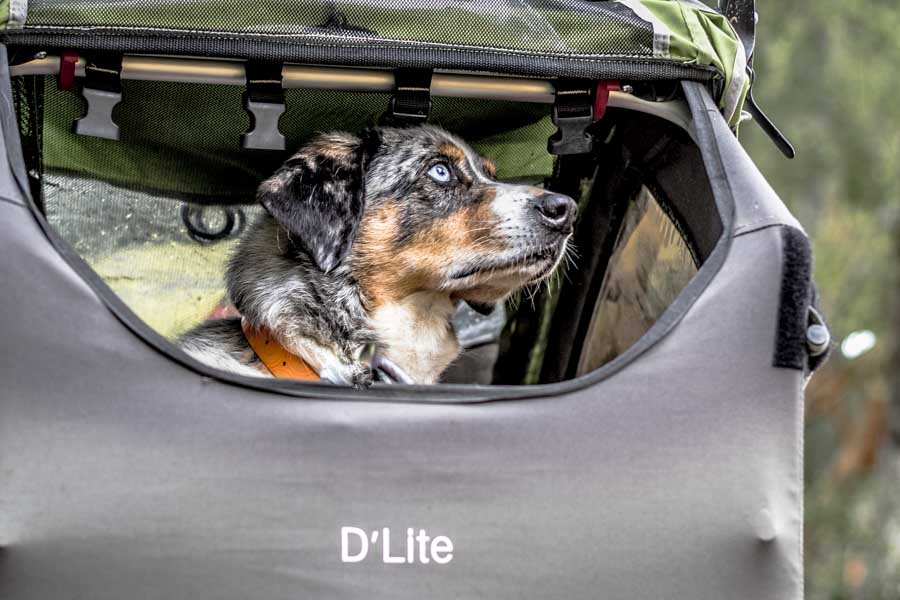 The Burley D-Lite Bike Trailer up close with Sora.