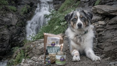 Curious about CBD oil for your pet? HempMy Pet CBD oil for dogs is some of the highest quality product available on the market. Read our full review here to see why we love it.