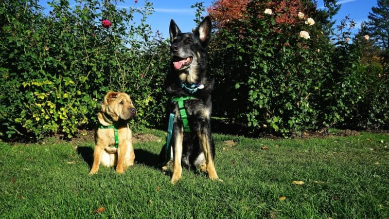 Buster And Ty Of GoPetFriendly Enjoyed Their Visit To Portlands Dog Friendly International