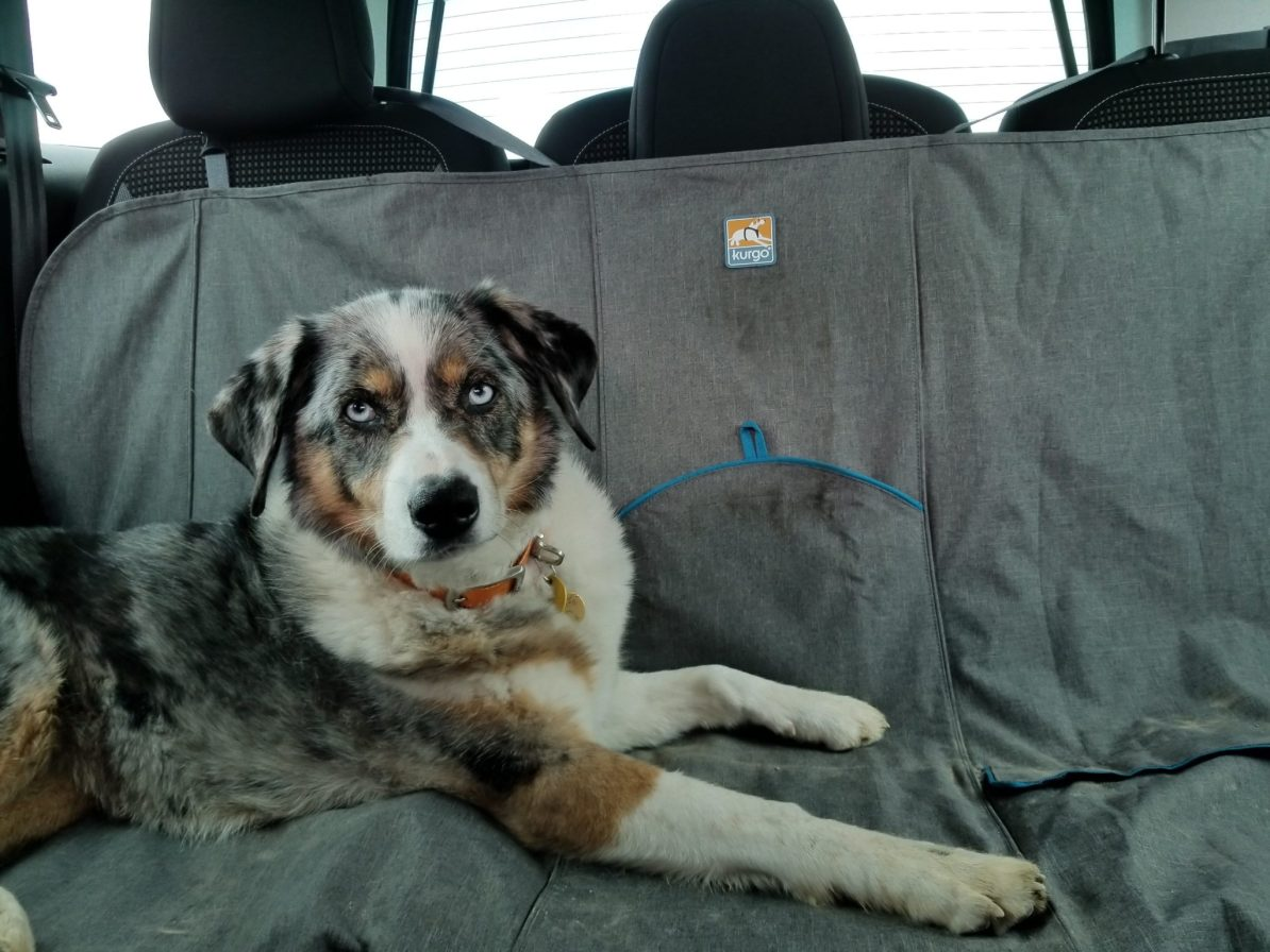 Headed on a road trip to Canada with a dog? Know the rules and regulations before crossing the border.