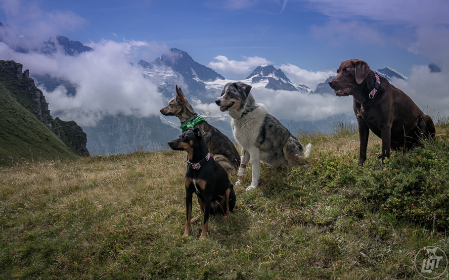 Making new friends who have dogs is a great way to do more activities together, meet new people, and discover new places.