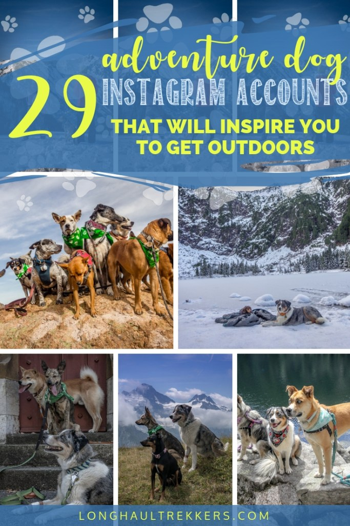 These adventure dog Instagram accounts will inspire you to get outdoors more often with your pup.