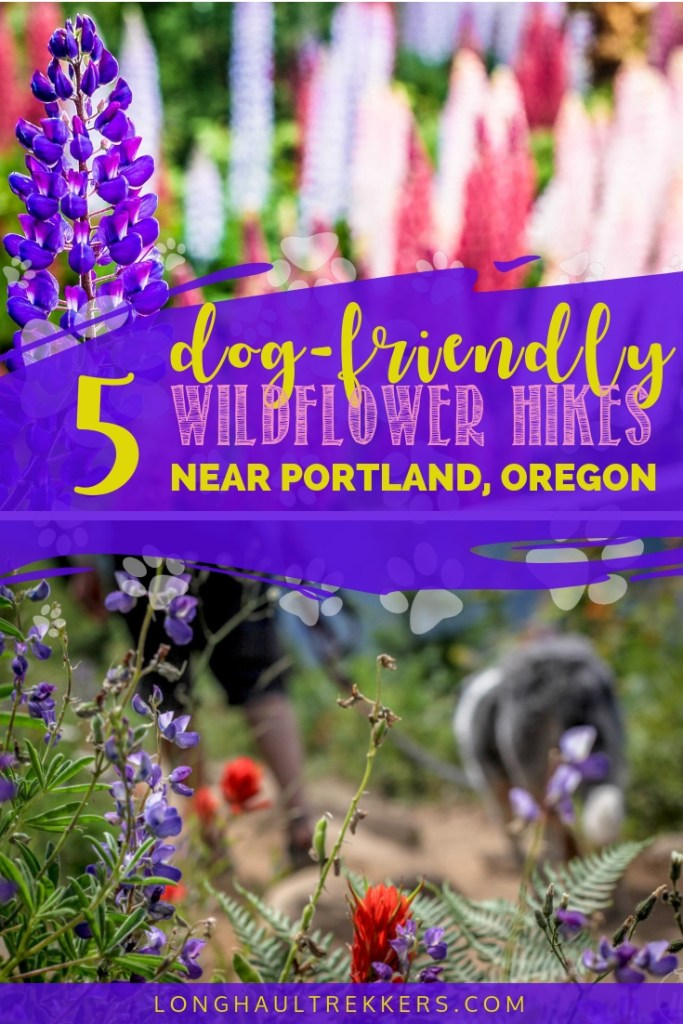 An array of dog-friendly wildflower hikes near Portland await hikers each spring. Check out some of the top spots to see the colorful blooms.