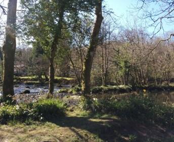 walk-treestream