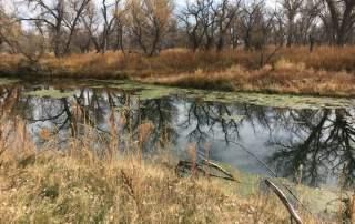Longmeadow Game Resort - Colorado Duck Hunting
