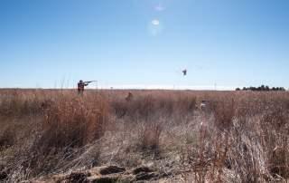 Colorado Pheasant Hunting