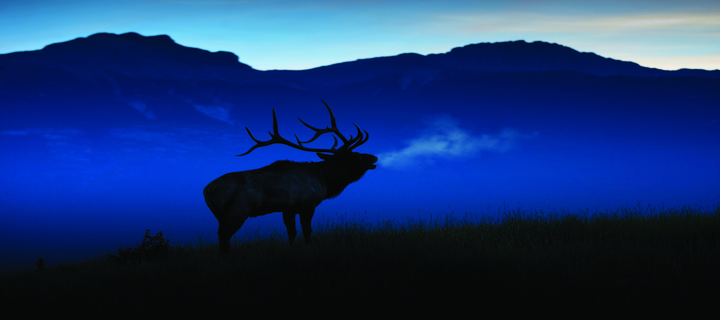 Archery Moose Hunting Background
