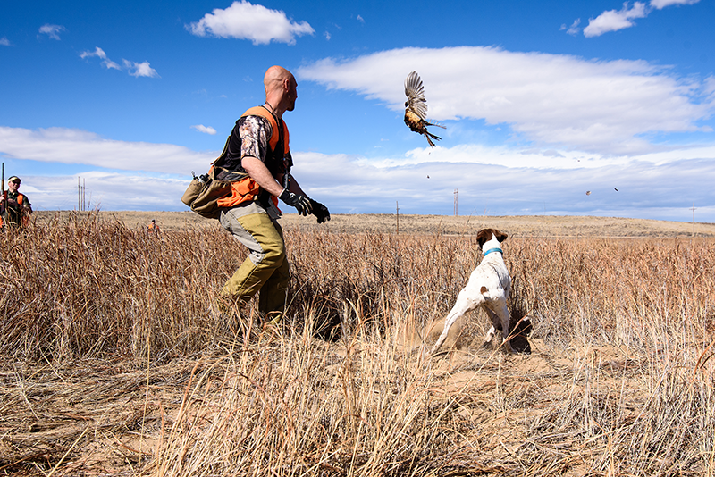 Pheasant Hunting At Longmeadow Game Resort, Clays Club, And Event Center