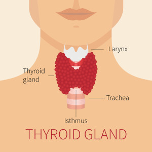 thyroid chiropractic care longmont