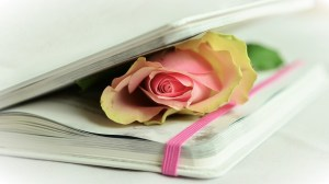 A pink rose in between the pages of a writing journal.