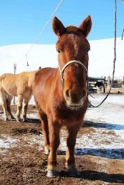 cheval batsumber