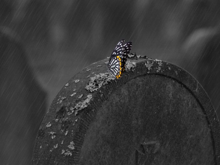 A butterfly resting on a tombstone in the rain