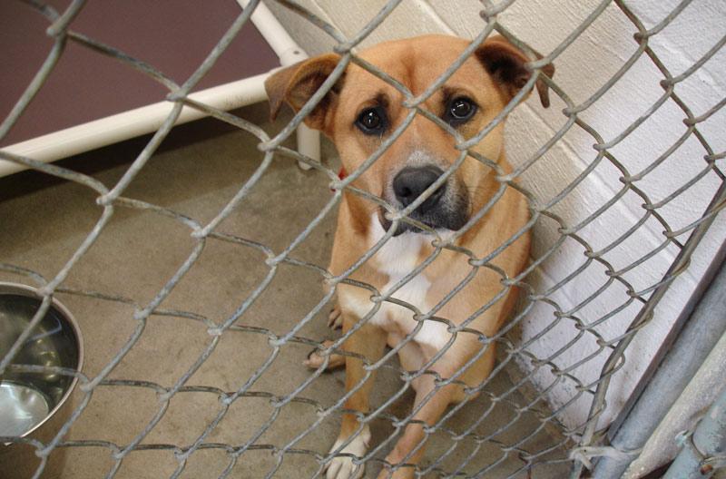 dog-kennel-vs-house-sitter