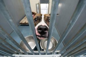 miserable-dog-kennel