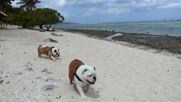 Bella and Angus take a stroll along the beach