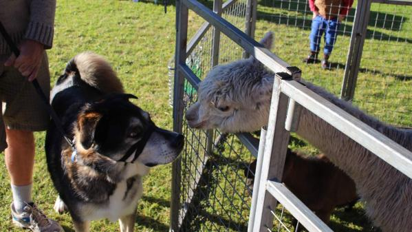 Meet the neighbours at the local farmers' market
