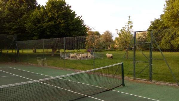 The sheep paddock and feeding pen
