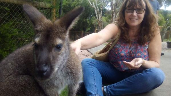 Up close and personal with the wallabies