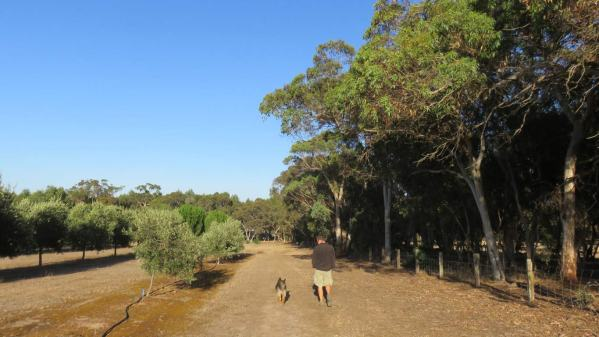 Tasha always joined in the walks around the olive grove