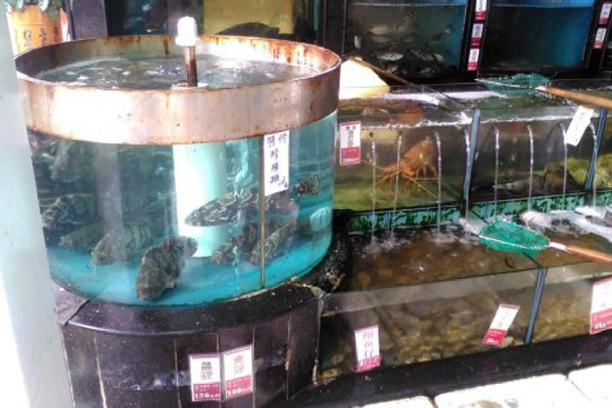 Live seafood and fish on display