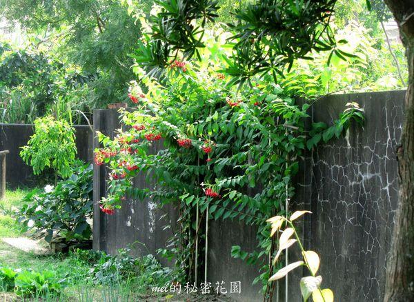 feng-shui-yang-house-longyu369357