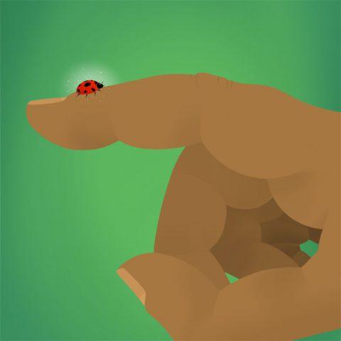 ladybug_sq