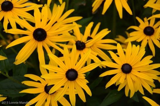Flower 20130823-20