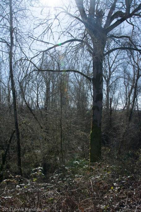 2015.02-Snag Boat Bend-06-0676