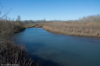 2015.02-Snag Boat Bend-10-0683