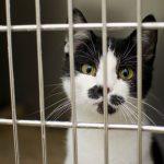 keskkonnasõbralik ja julmusevaba lemmikloomatoit