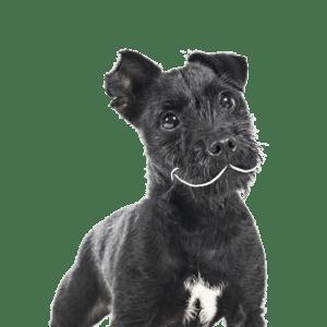 taimne koeratoit - vegan koer