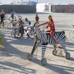 Unicorn Zebra. Photo: Wendy Goodfriend